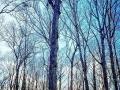 Heartwood Tree Service