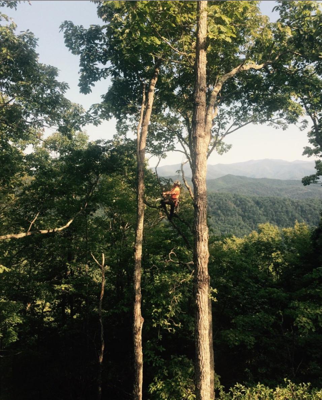 Heartwoord_Mountain Pruning